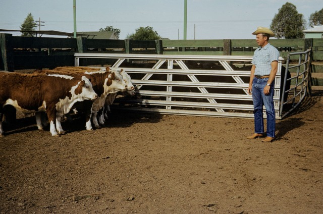 Kenneth and Cattle by Gina DeGideo, with photograph by Marvin Morrison