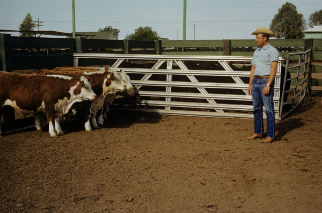 Ken & Cattle_DeGideo